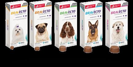bravecto ยาเม็ด กำจัดเห็บ หมัด ขี้เลื้อน