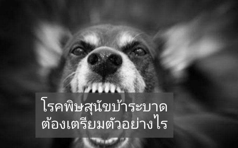 โรคพิษสุนัขบ้า