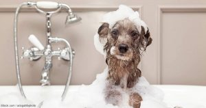 Dog in bath tub fb 300x158