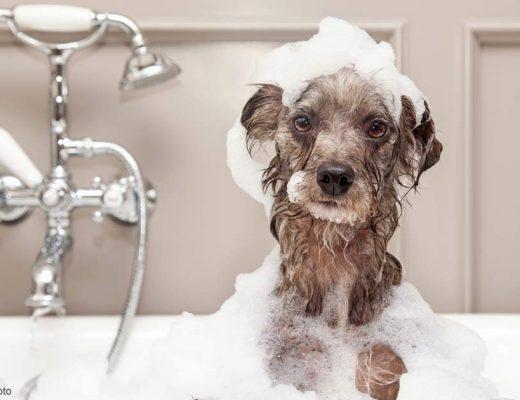วิธีอาบน้ำหมา - หมาอยู่ในอ่างอาบน้ำ มีฟองรอบๆตัว และบนหัว